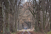 Walkers run on path in wintry Brandenburg through an old tree avenue, Germany