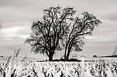 Winter ladnschaft field trees on arable landscape, negative development, Germany, Brandenburg