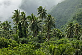 Coconut palms and lush vegetation against a mountain backdrop, Tahiti Iti, Tahiti, Windward Islands, French Polynesia, South Pacific