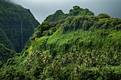Lush vegetation on mountain with waterfall, Tahiti Iti, Tahiti, Windward Islands, French Polynesia, South Pacific
