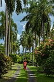 Worthy Tahitian woman walks along a coconut palm-lined path through garden, Tahiti, Windward Islands, French Polynesia, South Pacific