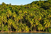Coconut palms along Bora Bora Lagoon, Bora Bora, Leeward Islands, French Polynesia, South Pacific