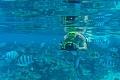 Underwater shot of man with Panasonic Lumix camera with underwater housing while snorkeling with tropical fish in the lagoon of Bora Bora, Bora Bora, Leeward Islands, French Polynesia, South Pacific