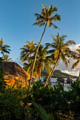 A young blonde woman looks from the balcony of her honeymoon suite amid coconut trees at overwater bungalows of the Sofitel Bora Bora Private Island Resort in the lagoon of Bora Bora, Bora Bora, Leeward Islands, French Polynesia, South Pacific