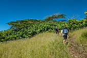 People enjoy hiking excursion with Valentin Urarii from Moorea Trek, Moorea, Windward Islands, French Polynesia, South Pacific