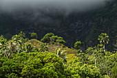 Palm trees and mountain backdrop, Hanavave, Fatu Hiva, Marquesas Islands, French Polynesia, South Pacific