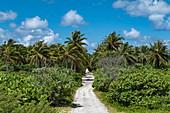 Road through the interior of the island with coconut trees, Avatoru Island, Rangiroa Atoll, Tuamotu Islands, French Polynesia, South Pacific