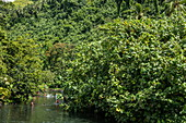 Children play in the river amid lush vegetation, near Taravao, Tahiti, Windward Islands, French Polynesia, South Pacific
