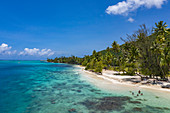 Aerial view of beach and people in the water of Opunohu Bay, Moorea, Windward Islands, French Polynesia, South Pacific