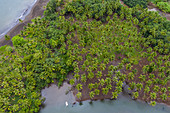 Aerial view of coconut trees on the beach at estuary, Taipivai, Nuku Hiva, Marquesas Islands, French Polynesia, South Pacific