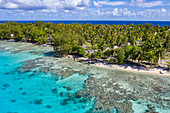Aerial view of people relaxing on the beach with coconut tree plantation behind them, Avatoru Island, Rangiroa Atoll, Tuamotu Islands, French Polynesia, South Pacific