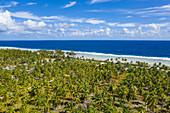 Luftaufnahme Plantage von Kokosnussbäumen, Insel Avatoru, Rangiroa-Atoll, Tuamotu-Inseln, Französisch-Polynesien, Südpazifik