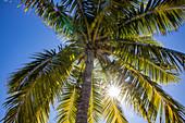 Sun rays shine through palm fronds at Malamala Island Beach Club, Mala Mala Island, Mamanuca Group, Fiji Islands, South Pacific