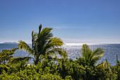 Coconut trees at Malamala Island Beach Club, Mala Mala Island, Mamanuca Group, Fiji Islands, South Pacific