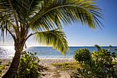 Coconut palm on the beach at Malamala Island Beach Club, Mala Mala Island, Mamanuca Group, Fiji Islands, South Pacific