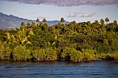 Mangroves, palm trees and lush vegetation with mountains behind, Port Denarau, near Nadi, Viti Levu, Fiji Islands, South Pacific