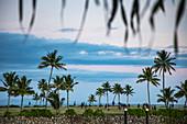 Mitarbeiter des Six Senses Fiji Resort spielen Rugby auf einem mit Kokospalmen gesäumten Feld am späten Nachmittag, Malolo Island, Mamanuca Group, Fidschi-Inseln, Südpazifik