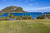 Luftaufnahme von Jungen die Rugby auf dem Feld der Dorfschule spielen mit Kreuzfahrtschiff MV Reef Endeavour (Captain Cook Cruises Fiji) in der Ferne, Nabukeru, Yasawa Island Yasawa Group, Fidschi-Inseln, Südpazifik