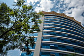 Tree and high-rise office building in the city center, Kigali, Kigali Province, Rwanda, Africa