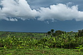 Banana trees, fertile fields and storm clouds, near Rwamagana, Eastern Province, Rwanda, Africa