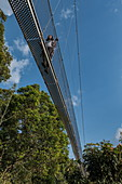 Low angle view to young woman on suspension bridge of Canopy Walkway, Nyungwe Forest National Park, Western Province, Rwanda, Africa