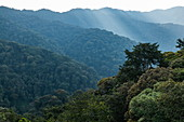 View of trees and mountains from the Canopy Walkway, Nyungwe Forest National Park, Western Province, Rwanda, Africa