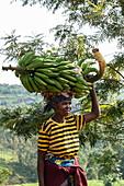 Smiling woman carries heavy banana tree on head, near Gisakura, Western Province, Rwanda, Africa