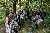 Ranger guide and group of hikers in the lush jungle during a chimpanzee discovery hike in Cyamudongo Forest, Nyungwe Forest National Park, Western Province, Rwanda, Africa