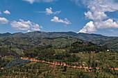 Tree plantations on mountains, near Gitesi, Western Province, Rwanda, Africa