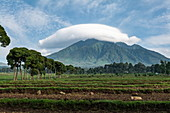 Cloud hovers over mountain, Volcanoes National Park, Northern Province, Rwanda, Africa