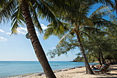 Coconut trees and beach chairs on Ong Lang Beach, Ong Lang, Phu Quoc Island, Kien Giang, Vietnam, Asia