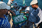 Fishermen with their catch on the pier, near Duong Dong, Phu Quoc Island, Kien Giang, Vietnam, Asia