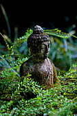 A stone carved Bhudda statue, set in a verdant green garden.\nBali, Indonesia.