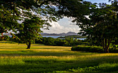View of a verdant green setting looking back through raintrees towards Antigua, in the west Indies.