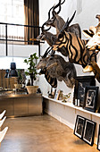 Innenansicht eines Künstlerhauses in Kopenhagen. Tierköpfe schmücken die Wand zusammen mit Gemälden desselben Künstlers, Dänemark, Europa
