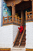 A buddhist monk, dressed i9n bright red, descending a flight of stairs inside a Bhutanese temple. Shot in Bhutan.