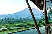 View from a bamboo terrace, across green rice paddies, of the active volcano, Mount Agung, in Bali.
