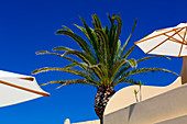 2 white umbrella´s and a palmtree set against a bright blue sky. Algarve, Portugal.