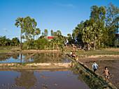 Luftaufnahme von Dorfkindern die auf Deich entlang Reisfeldern laufen, Kampong Prasat, Kampong Chhnang, Kambodscha, Asien