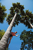 Young woman leans from trunk of a coconut tree and waves, Andong Russei, Kampong Chhnang, Cambodia, Asia