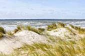 Düne vor dem Meer, Sandhafer (Ammorphila), Dünengras, Nordsee, Norderney, Ostfriesland, Niedersachsen, Deutschland
