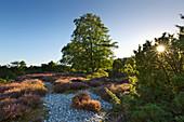 Feuersteinfelder in der Schmalen Heide, Rügen, Ostsee, Mecklenburg-Vorpommern, Deutschland