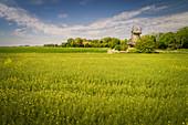Rape field and Stumpenser mill in Horumersiel, Wangerland, Friesland, Lower Saxony, Germany, Europe