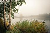 Birken und Schilf im Nebel am Ollacker See, Wilhelmshaven, Niedersachsen, Deutschland, Europa