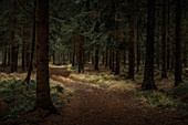 Path in the dark autumn forest, Wiesede, Friedeburg, Wittmund, East Frisia, Lower Saxony, Germany, Europe