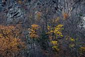 Laubbäume in Herbstfarben an Felswand, Bodetal, Thale, Harz, Sachsen-Anhalt, Deutschland, Europa