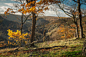 View into the Bodetal in autumn, Thale, Harz, Saxony-Anhalt, Germany, Europe