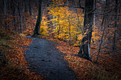 Path in autumn forest, Thale, Harz, Saxony-Anhalt, Germany, Europe