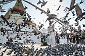 Pigeons fly on at the Bodnath Stupa in Kathmandu, Nepal, Asia.