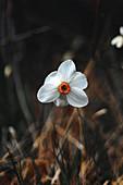Wildflower on the Fröttmanninger Heide, Fröttmanning, Munich Germany